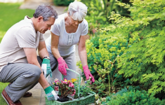 Gardening for Exercise