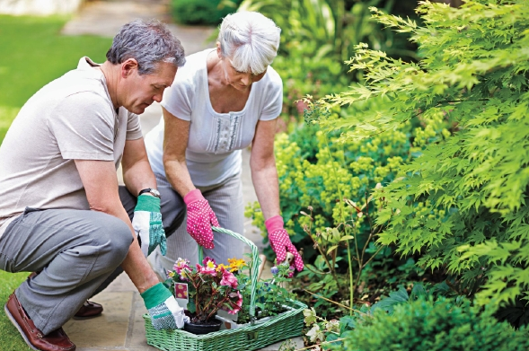 6 Major Health Benefits of Gardening You Didnt Know About