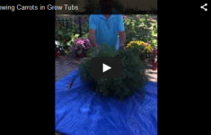 Growing Carrots Video