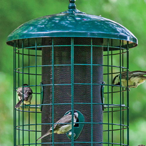 out article keep ways mean cfm trouble bird can how feeder provide feeders resistant when a squirrels an of at to your squirrel conventional easy they pic but it apply