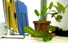 Office Houseplant